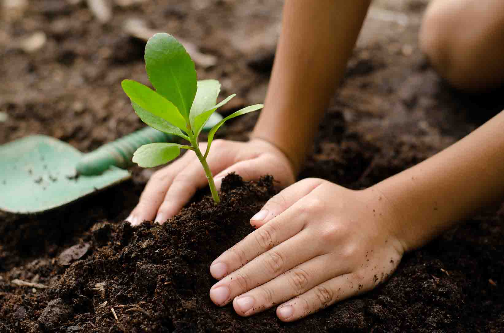 A child's hands plant a green seedling in the earth